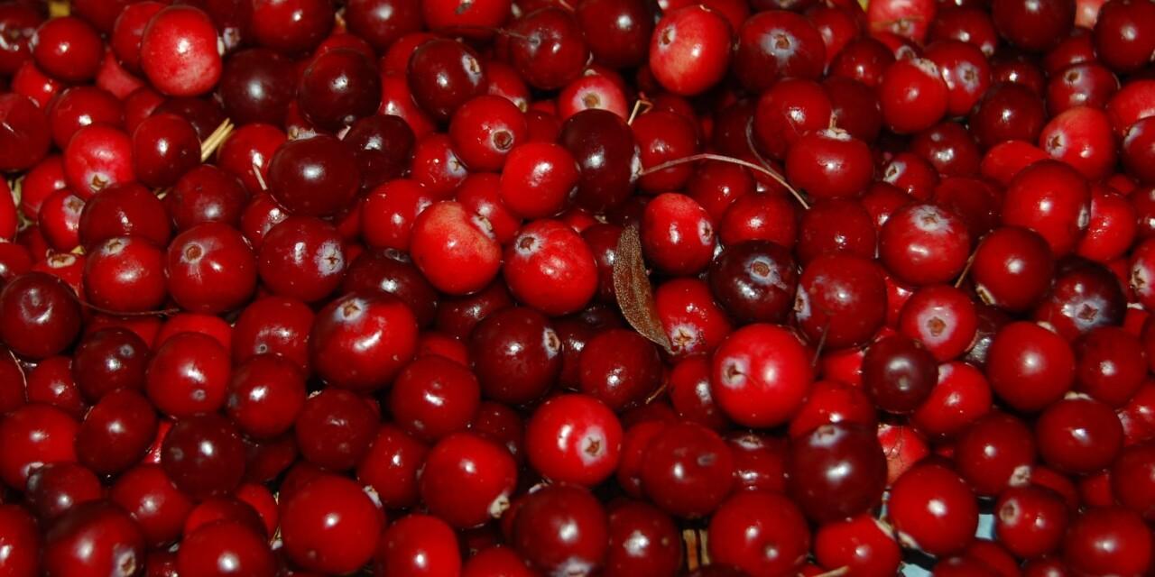 Cranberry Fruit Gelatin Salad