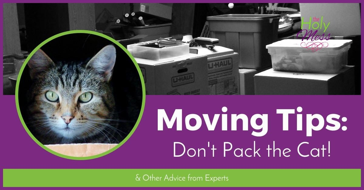 Moving Tips: Don't Pack the Cat and Other Moving Advice from Experts