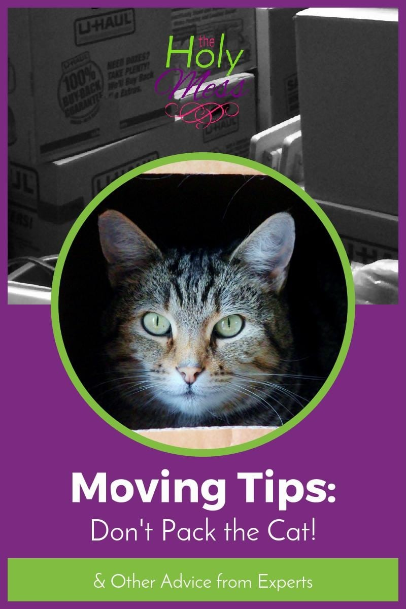 Moving Tips: Don't Pack the Cat and Other Advice from Moving Experts|The Holy Mess