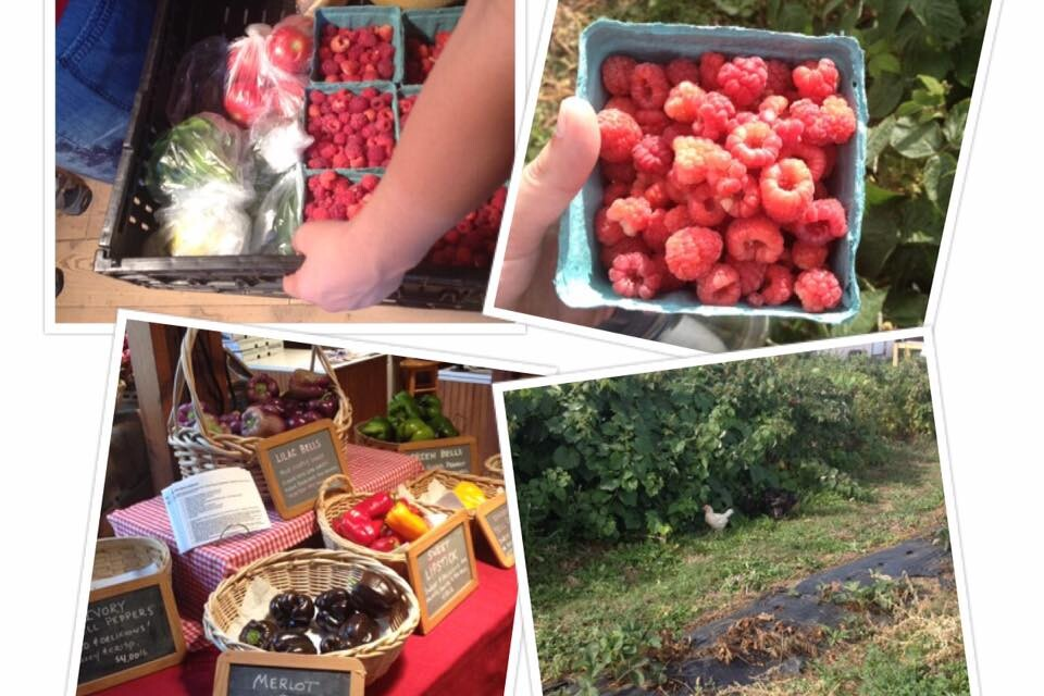 Pick Your Own Berries at Berry Patch Farm in Colorado