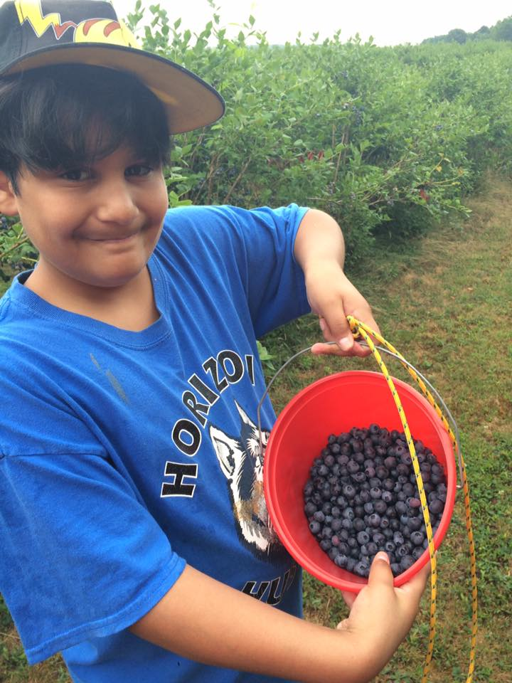Pick Your Own Berries|The Holy Mess