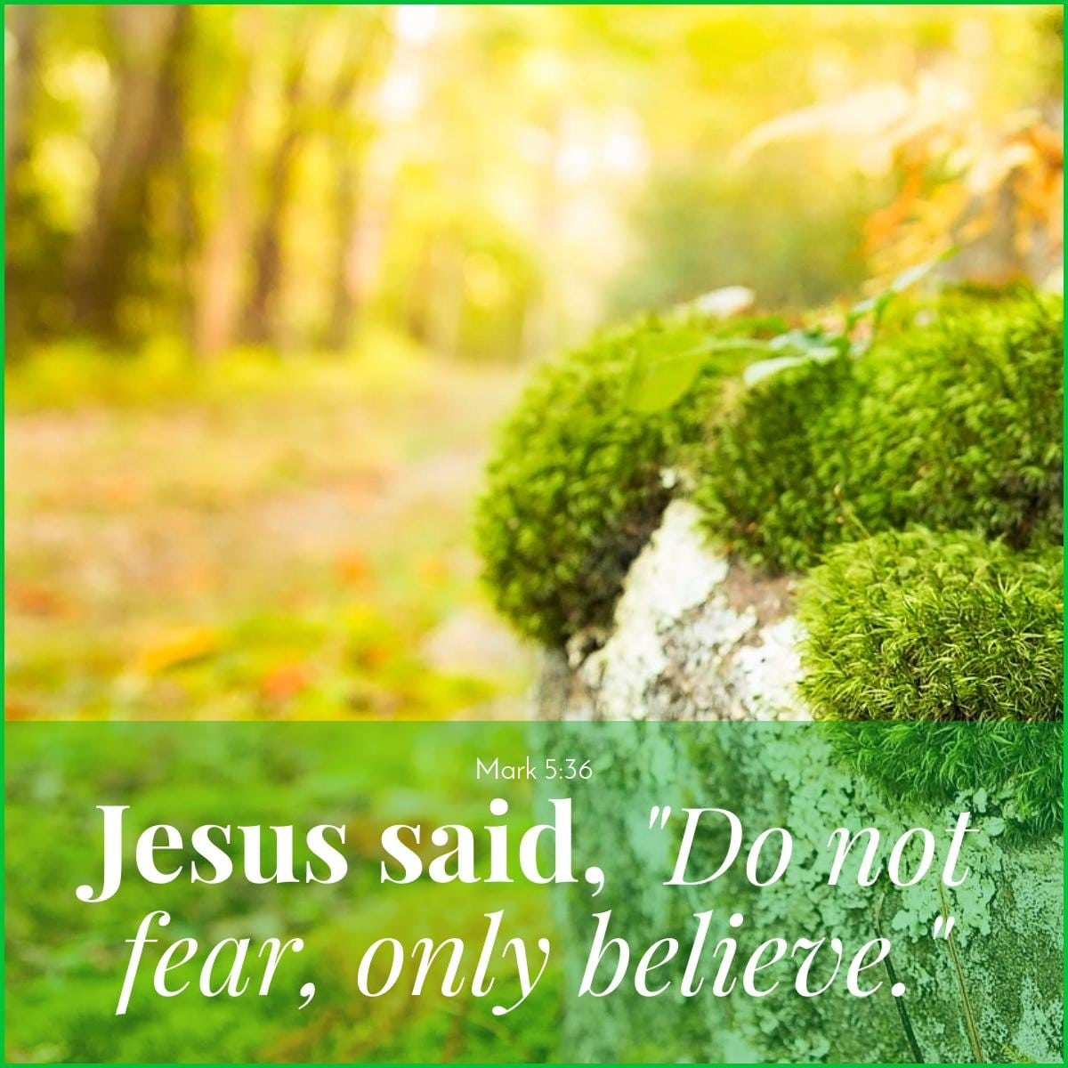 Jesus said Do Not Fear Only Believe|The Holy Mess