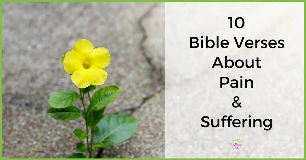 Bible Verses about Pain, yellow flower in sidewalk